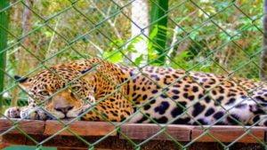 Conheça o trabalho do Zoológico da Unama em Santarém PA